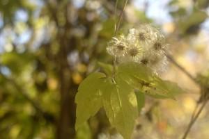 Seeds and leaf in October