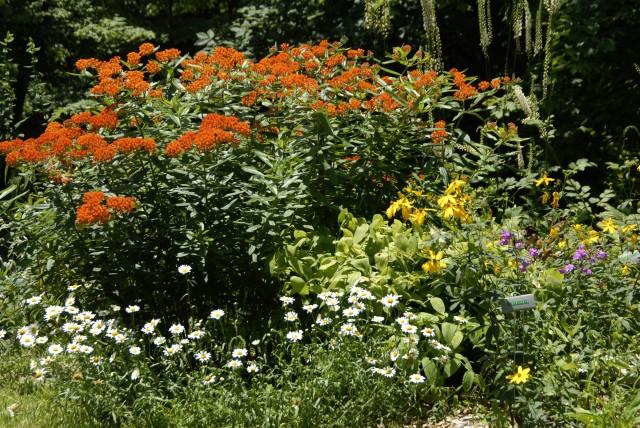 native garden_1